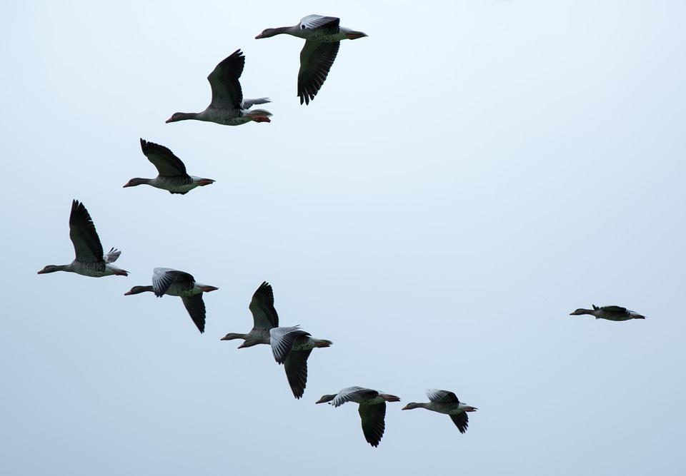 Europe : Changement climatique et écologique de la population aviaire