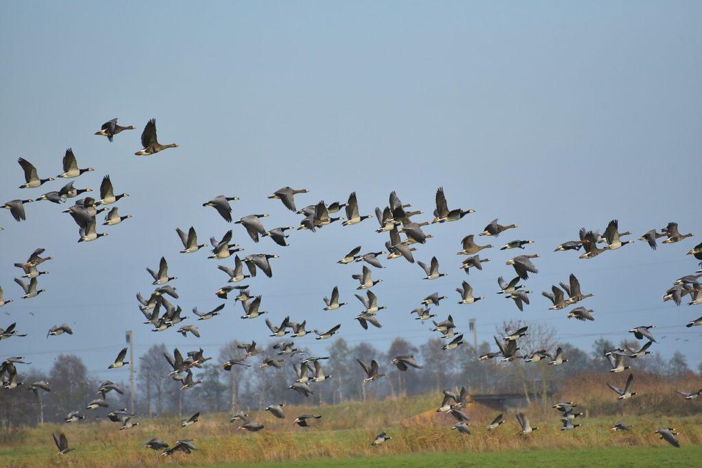 Des oiseaux migrateurs durant le changement climatique