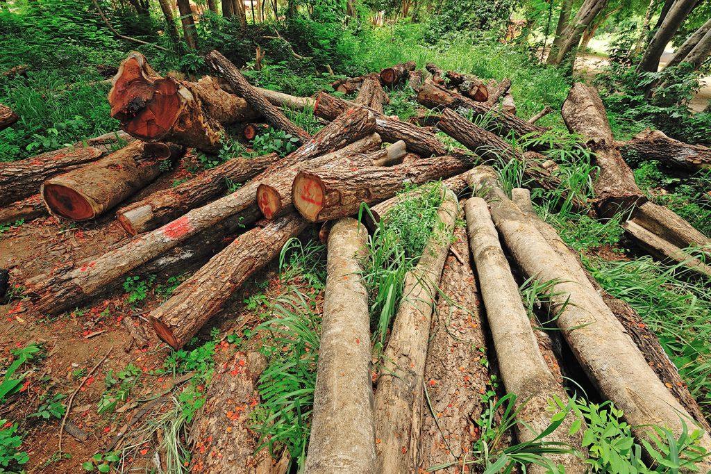 L'impact de la déforestation sur l'écologie