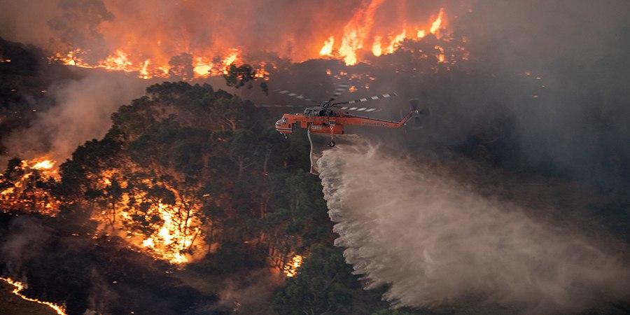 Incendies en Australie : un désastre écologique d'une grande ampleur